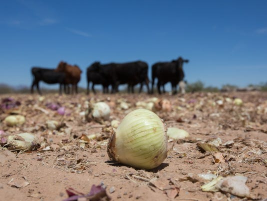 05292018-1-Onions-1.jpg