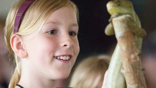 A child pets Sol the Solomon Island skink during a show from the Minnesota Zoomobile at the Wisconsin Rapids Municipal Zoo Tuesday, June 12, 2018. The two shows from the Zoomobile included five animals: Chinta the chinchilla; Sol the Solomon Island skink; a giant African millipede; Hog the Hog Island boa constrictor and Catalina the three banded armadillo.