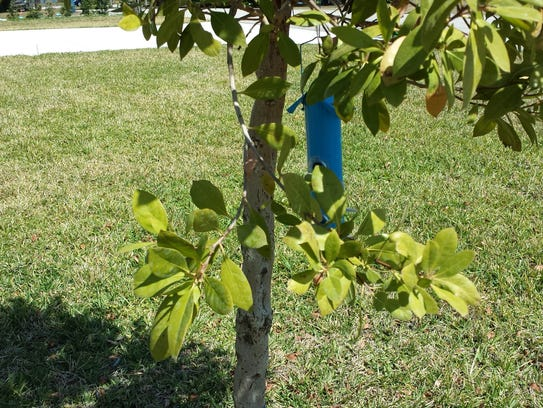 A reader wants helps identifying a tree which has bark