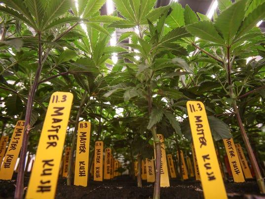 636149190145910814-Marijuana-MedMen0013.JPG