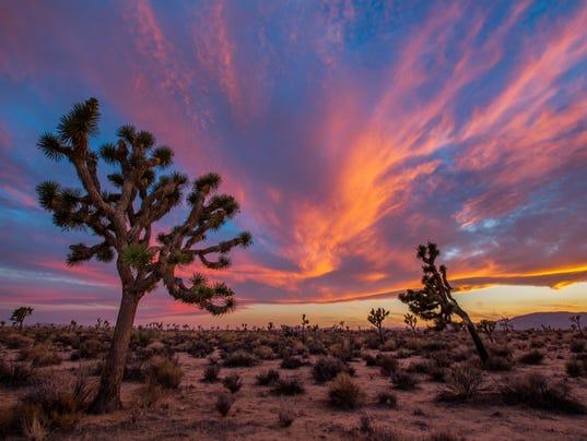Joshua Tree National Park Is A Desert Oasis