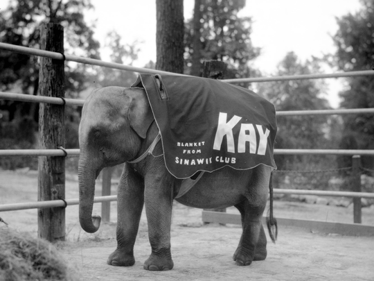 Kay the elephant at Mesker Zoo
