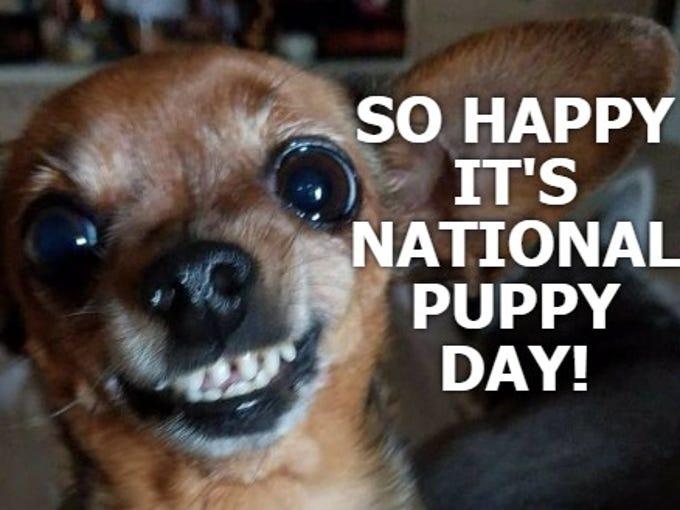 Were So Happy Its NationalPuppyDay