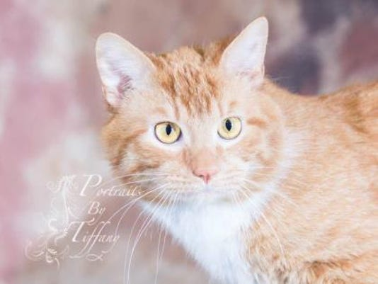 WDH 0817 Pet of the Week-Phineas