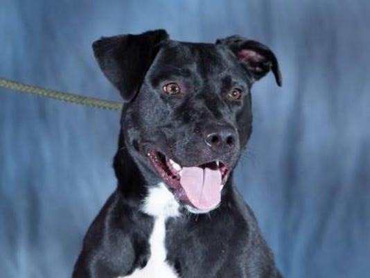 635784506182010885-WDH-0928-Pet-of-the-Week-Loretta