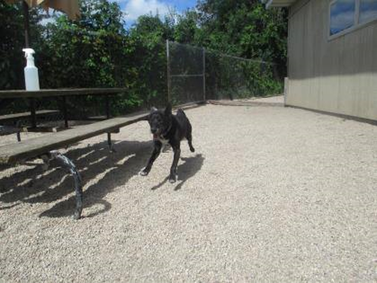 Sig, a black lab mix, was so excited to go outside at the Fond du Lac Humane Society, he had all four feet off the ground. RIP Sig.