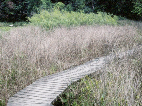 Henrietta Lake field station after biocontrol beetles were introduced to control purple loosestrife plants.