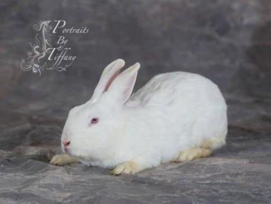 WDH 0427 Pet of the Week-Sunshine.jpg
