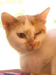 Cinderella the cat at Nashville Humane Association.