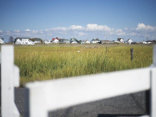 An egret stalks through the marsh outside of homes on Tangier Island.