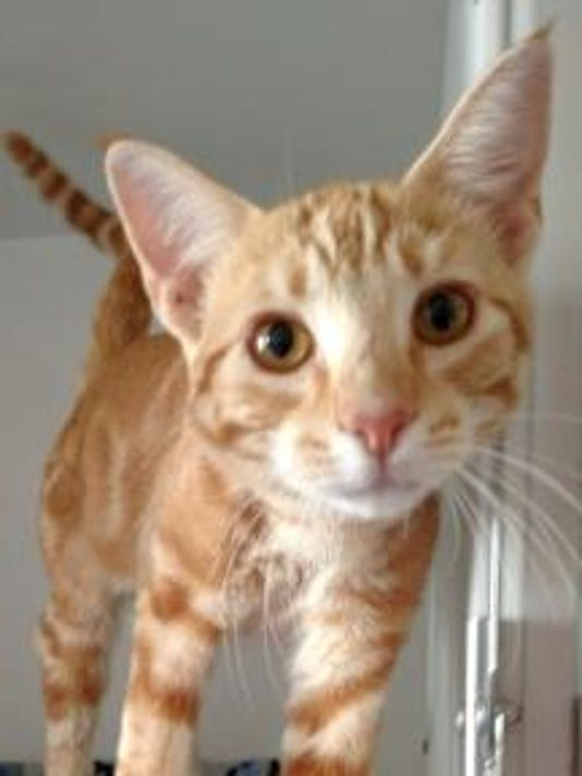 Pet of the day 1017