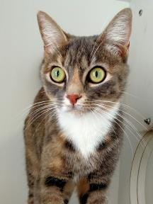 Shylo, the Current-Argus pet of the day.