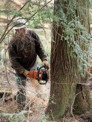 Tree faller Blake Marty of Duvall  uses a chain saw