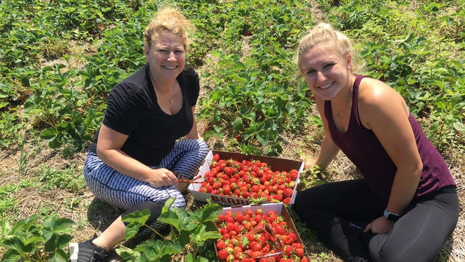 Michigan Strawberry Season Arrives Where To Pick Your Own
