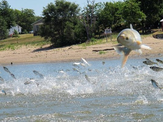 AP_Great_Lakes_Carp.jpg