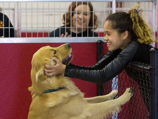 News: Dog Stop