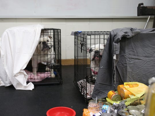 Pets brought to the Red Cross emergency shelter at Rickards High School are housed in the school's weight room Sunday.