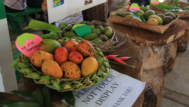 A glimpse of the many varieties of mangos grown locally on Guam at the Agat Mango Festival.