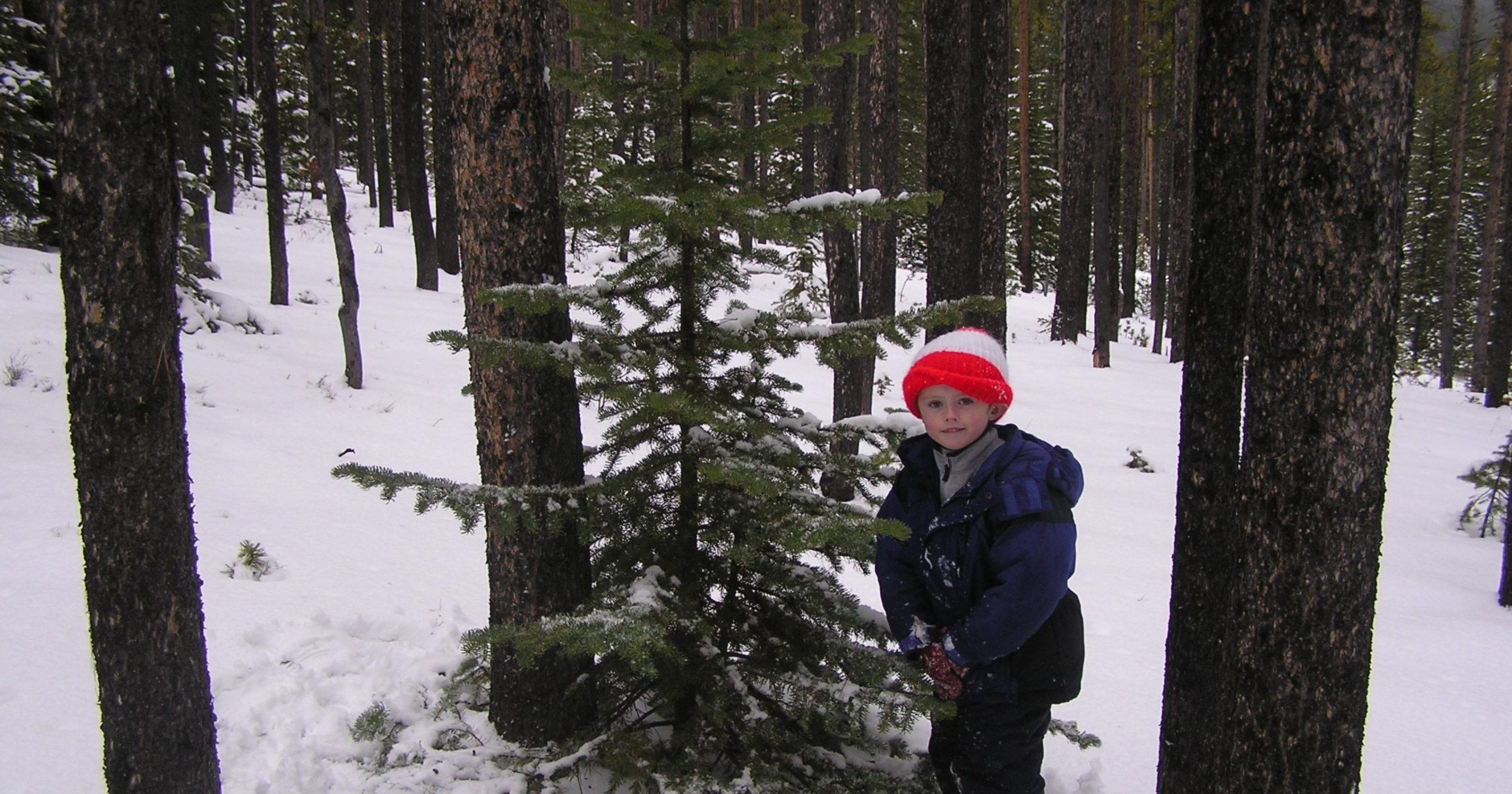 Picking The Perfect, Real, Christmas Tree