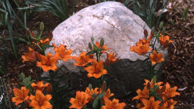 Add seasonal color with orange lilies in front of a giant rock.