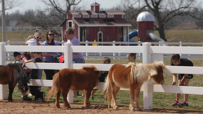 Rutledge-Wilson Farm features a diverse herd, including cows, pigs, miniature horses, goats, chickens and turkeys.