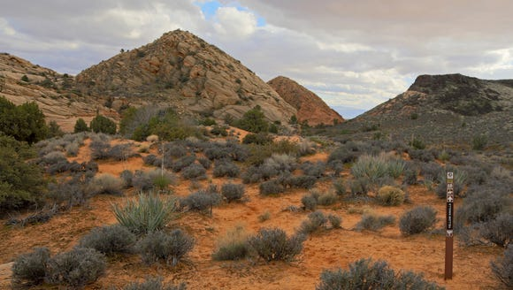 The Yellow Knolls Trail in the Red Cliffs Desert Reserve