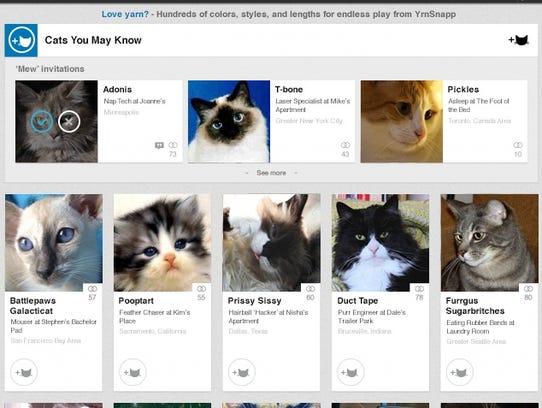 linkedin-cats