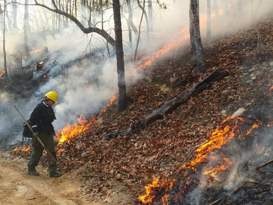 636226667194596686-Forest-controlled-burn-jennings.jpg
