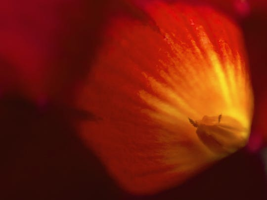 """Julie Barley of Lewisberry writes, """"Looks like a little monster lives in this flower."""""""