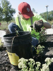 A public works seasonal worker, pulls weeds from the flower beds at Colby Park in Windsor Heights.