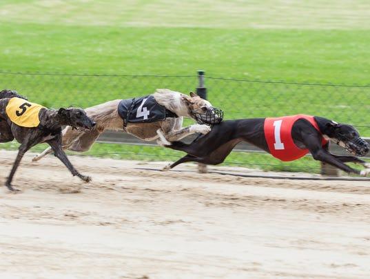 #stock Greyhound Stock Photo