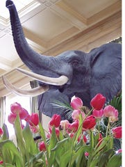 It may be the dead of winter, but it's going to feel like spring inside the George Eastman House