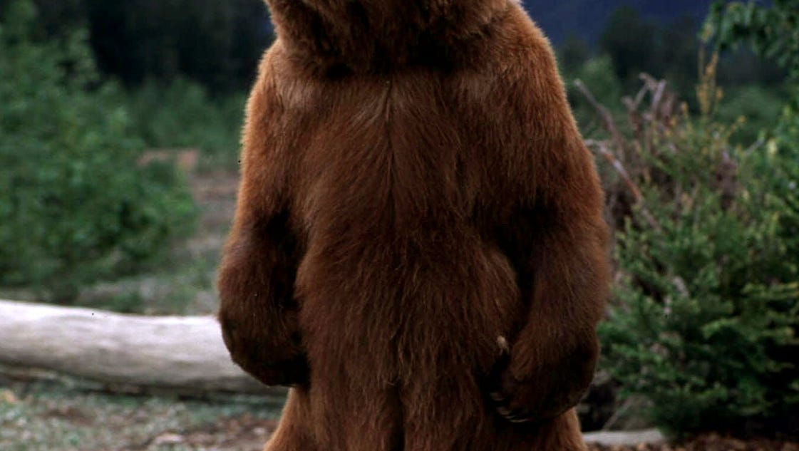 A Bear Market What are the 7 ...