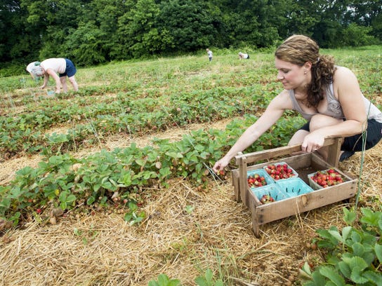 Diana Kline of Dover Township is the granddaughter of the former Barefoot Farm owner Luther Krone, who was known for gardening barefoot.