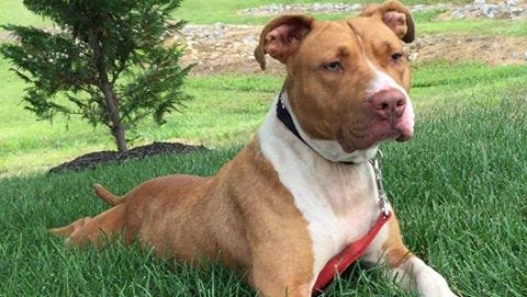 Sandra D is hoping for a permanent home, where she's sure to make a loyal companion.