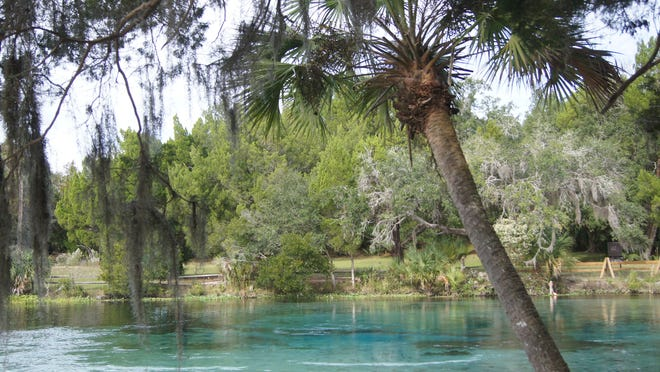 Silver Glen Spring is one of four major springs in the Ocala National Forest, which provides year-around recreation with almost 400,000 acres, 600 lakes and numerous rivers.