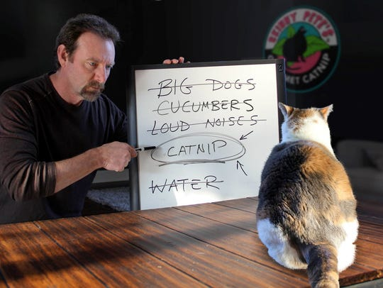 Rich Jackson discovers what cats want while interviewing