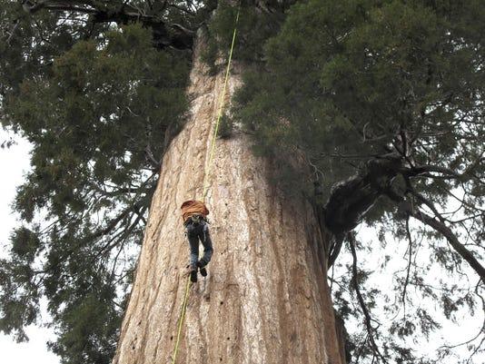 APTOPIX Cloning Giant Trees (2)