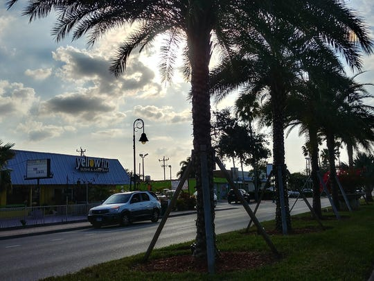 Hurricane Irma damaged trees along the Cape Coral Parkway,
