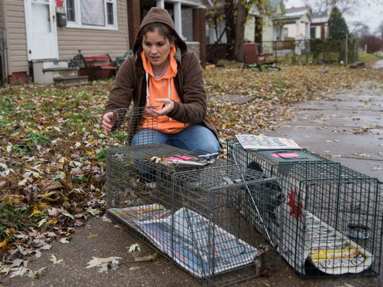 Jamie Taylor, the head of Feline fix, a non-profit cat rescue, sets up traps to catch feral cats to take them to the Humane Society to be fixed on Sunday afternoon.