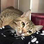 Kittens, ticks and flies – just another week at SPCA