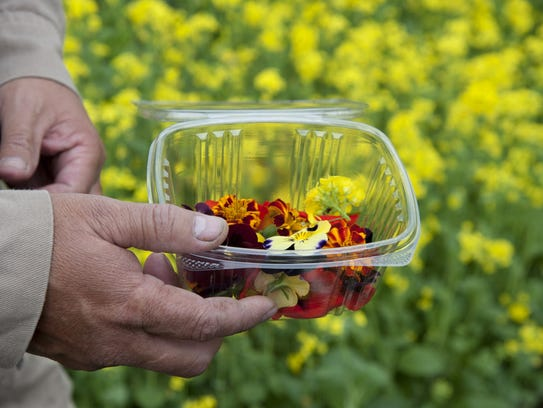 An employee collects edible flowers at a greenhouse