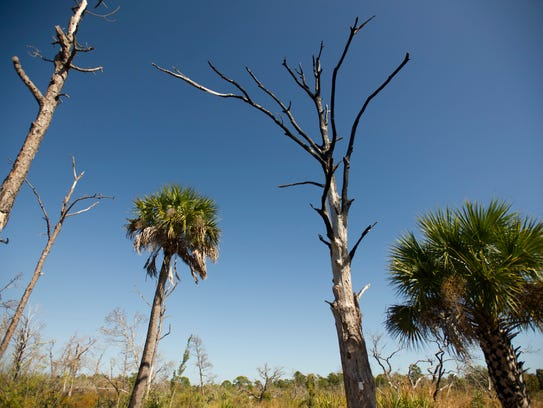 The Celebration of Stewardship is Saturday at Savannas Preserve State Park in Port St. Lucie.