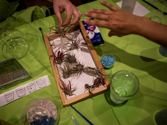Part of the air plant selection at Plant Nite at Riptide