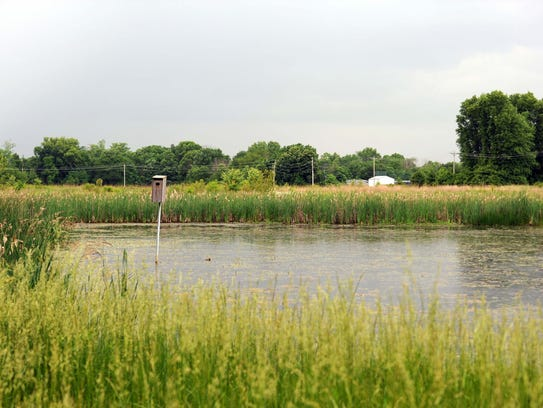 A wetland at Coyote Run Farm in Violet Township.