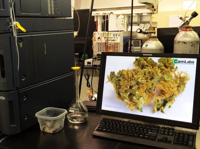 Marijuana 'edibles' pack a wallop