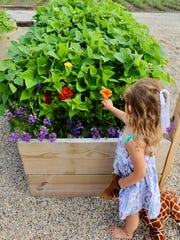 Garden blogger Casey Lynn Lawrence's daughter Lana picks a flower from one of the many raised beds at the family's Town of Raymond home.