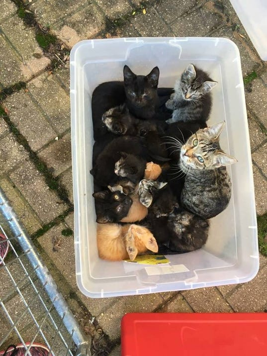 tote of kittens.jpg