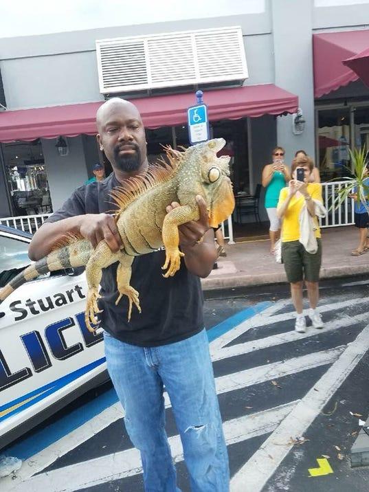 636437598998101868-iguana-hunt.jpg