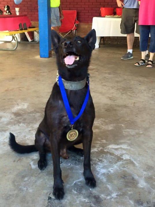 Brookhaven Dog Rescue